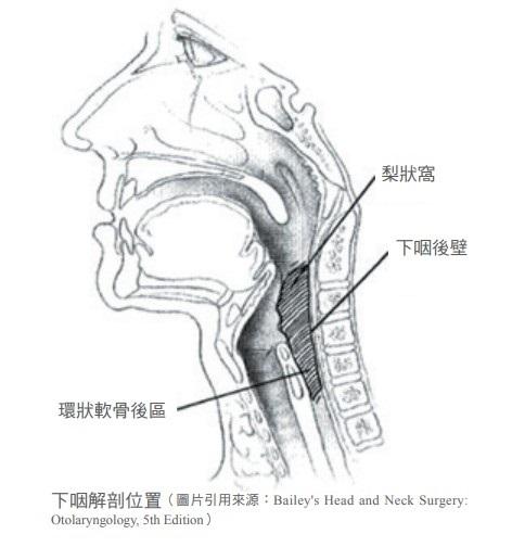 下咽解剖位置