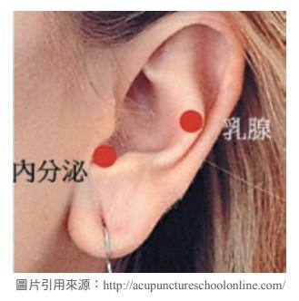 耳穴(可搭配耳豆貼或磁珠貼)