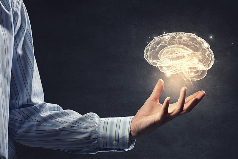 小小腦下垂體 調控內分泌的樞紐